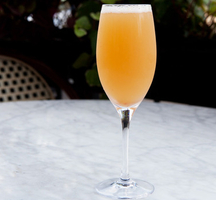 Outdoor-mimosa