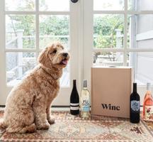 Winc wine dog