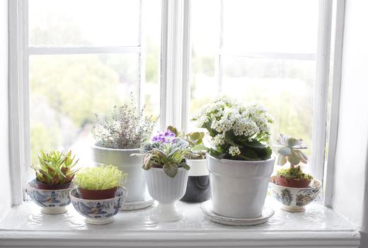 Ann sofia plants window nature