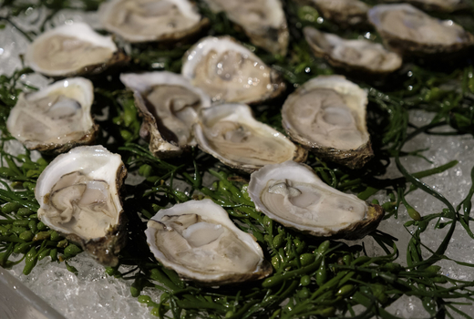 Grand gourmet fresh oysters