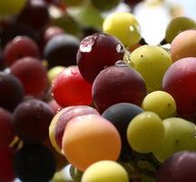 Wine-tasting-free