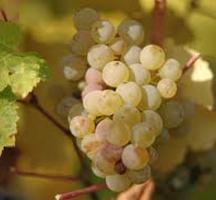 Rieseling-wine