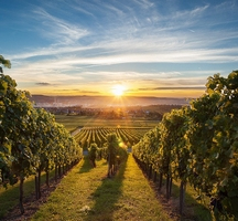 Long_island-wine_tours
