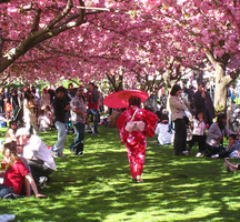 Cherry_blossom_festival-brooklyn_botanic_garden