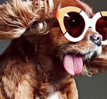 Toast_the_dog-nyc_celeb_events