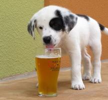 Brooklyn_beer_puppy_free_beer_nyc