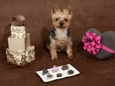 Valentine Chocolate Puppy