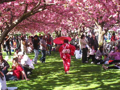 The Cherry Blossom Festival At Bbg Brooklyn Botanic Garden Events Pulsd Nyc