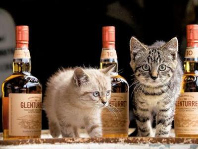 [Image: distillerycats-dele.jpg]