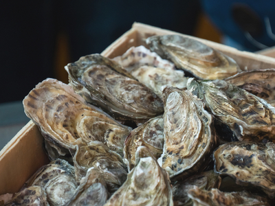 Oysters shell ebration