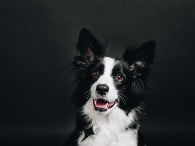 Doggy photo shoot