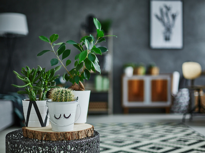 Houseplants beginners plantshed
