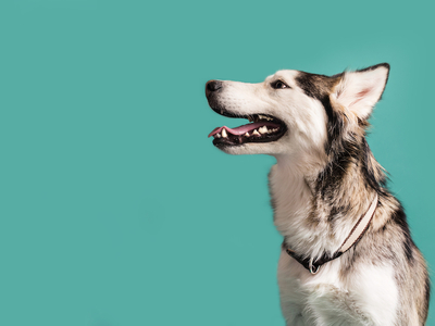 Bond vet blue puppies dog
