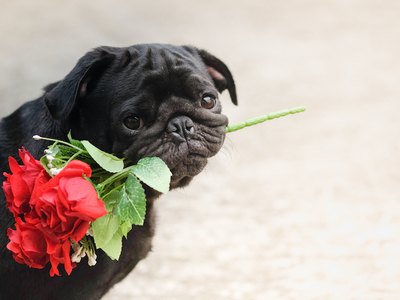 Valentines day pawty dogs