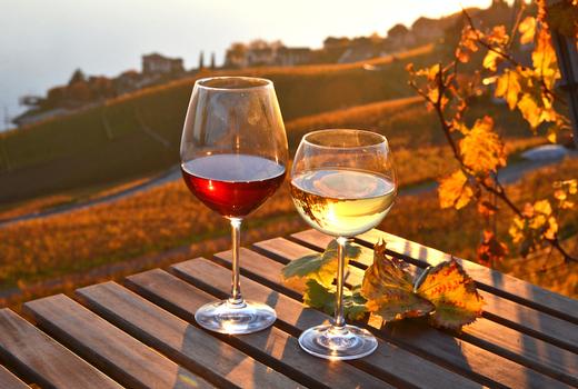 Wine insiders autumn leaves